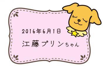 2016-06-01 江藤プリンちゃんのコピー