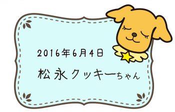 2016-06-04 松永クッキーちゃんのコピー